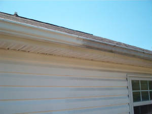 Black Stains On White Gutters
